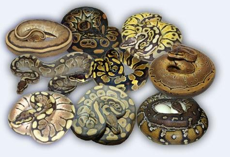 Caderno de laborat rio o dia a dia de um laborat rio de ti for Decorator python